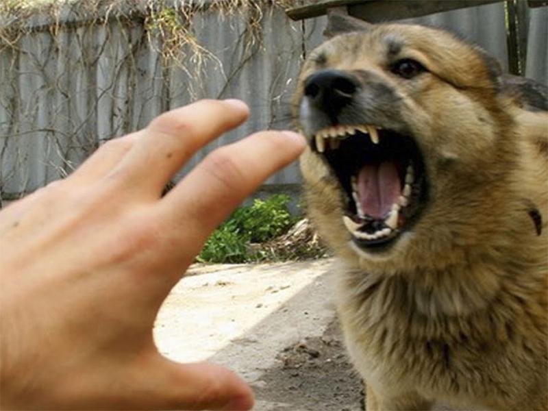 За навязчивость людей на Херсонщине наказывают собаки