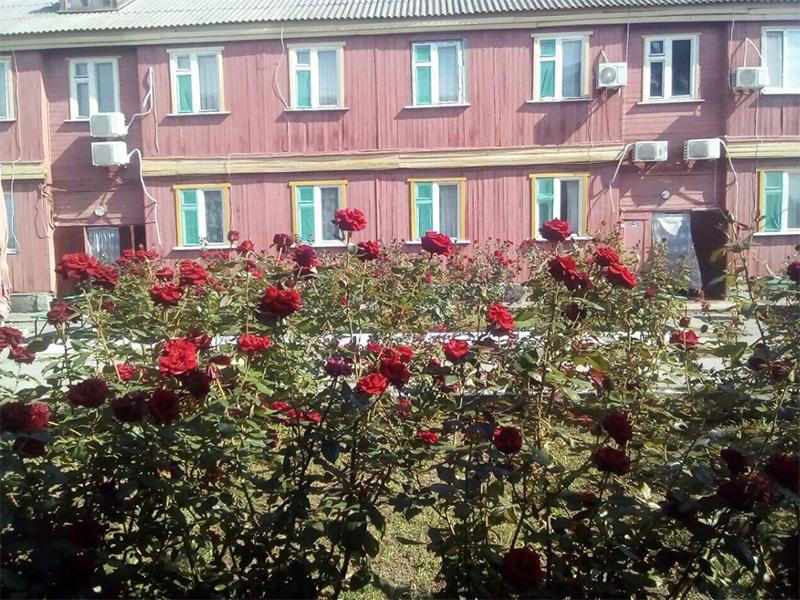 Розовый рай на Черноморском курорте Херсонщины