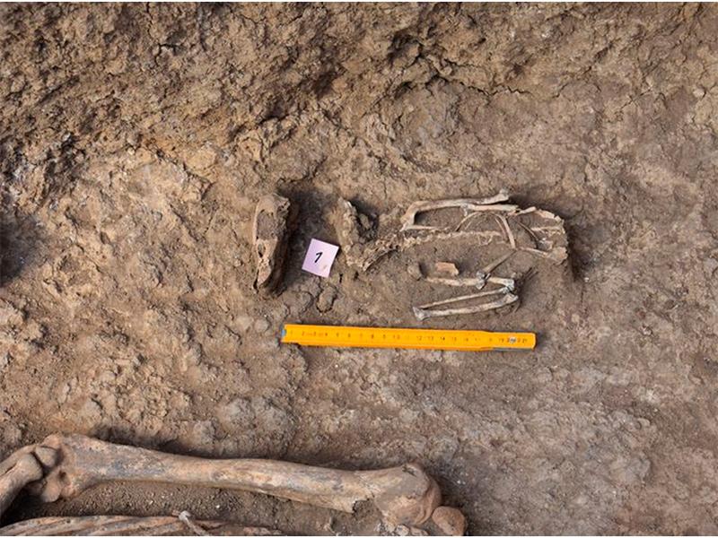 Скифское золото в кургане на Херсонщине пока не отыскали