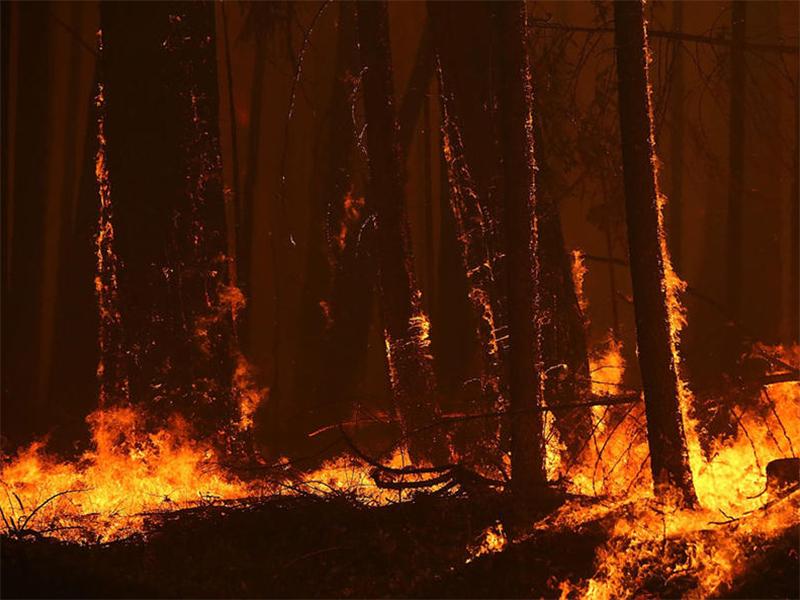 Поджоги в заповеднике на Херсонщине