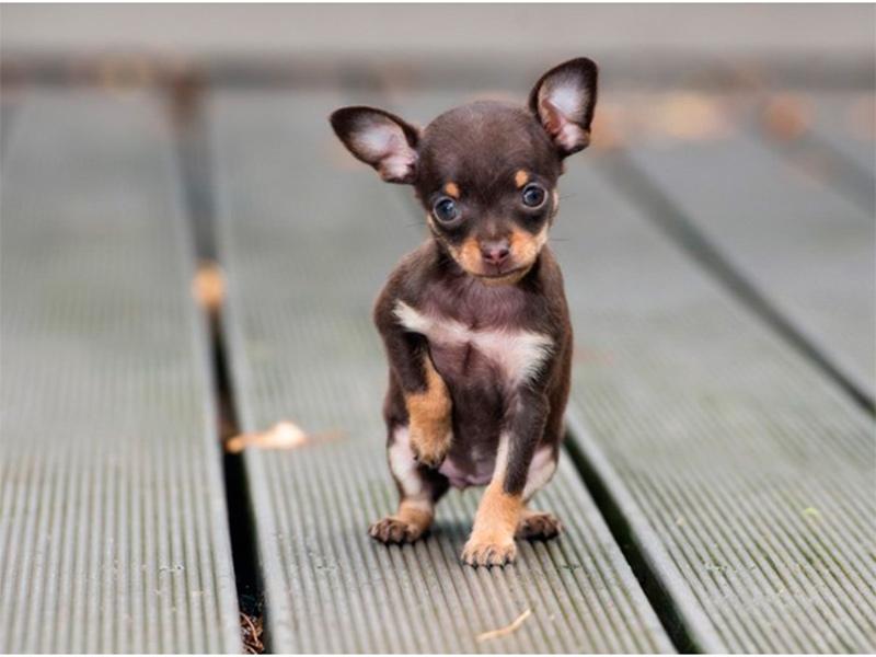 В Херсоне собака спасла жизнь своему хозяину