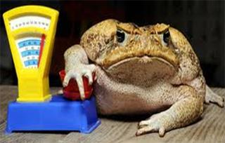 Когда жаба давит
