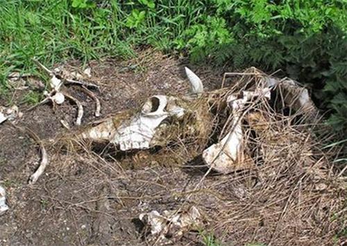 Под Херсон заложили очередную экологическую бомбу