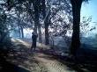 Масштабы лесного пожара на Херсонщине шокируют