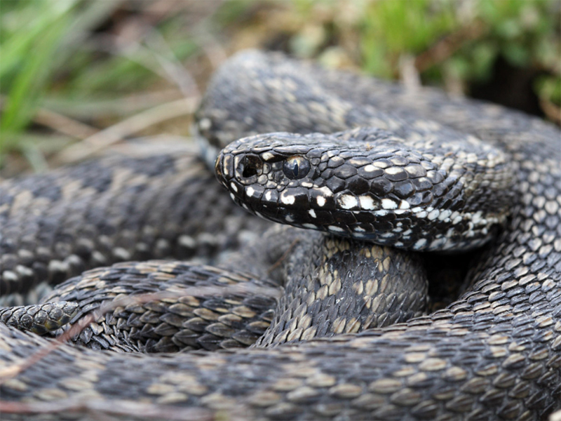 Неизвестная змея атаковала сельчанина на Херсонщине