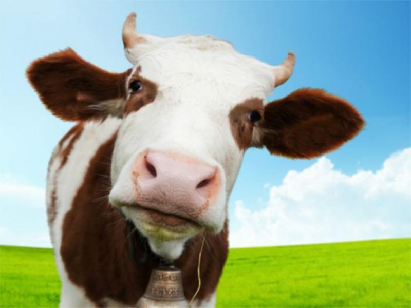 Жительница Херсонщины за кражу и продажу коровы заплатит штраф