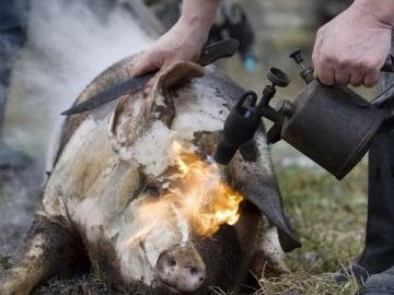 Мясник-любитель обгорел на пару с кабанчиком в селе под Херсоном