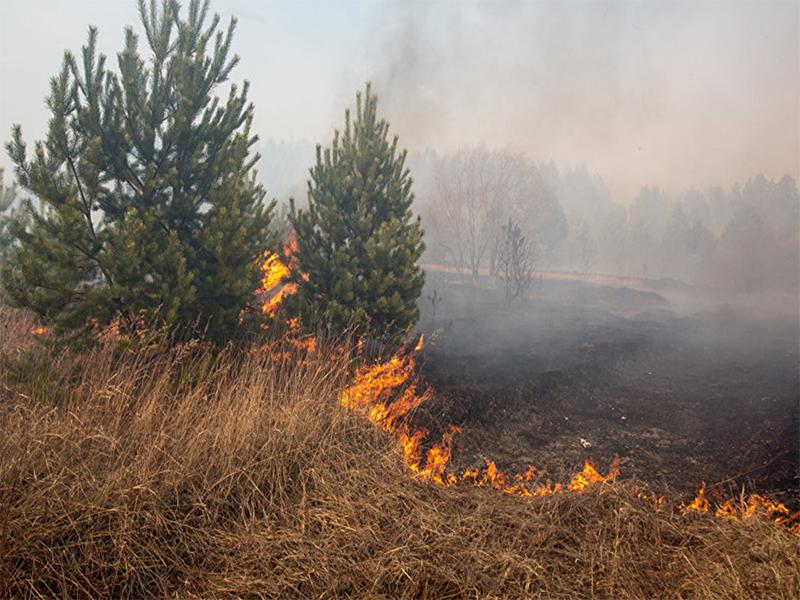 Каховський лісгосп попереджає про небезпеку