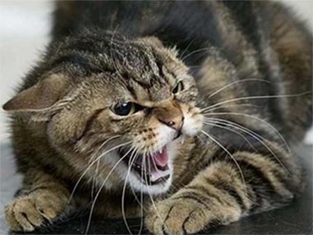 За оттоптанный хвост кошка отомстила херсонской пенсионерке