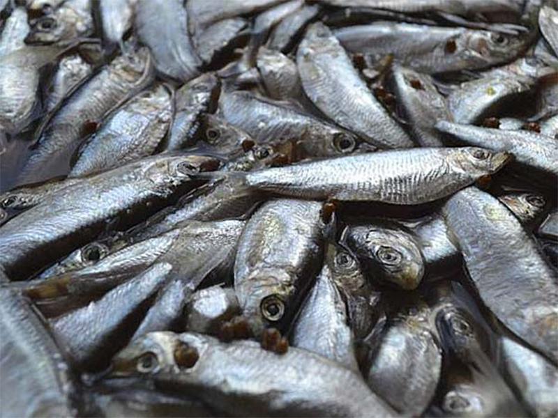 Рыбаки Херсонщины готовятся к тюлечной путине