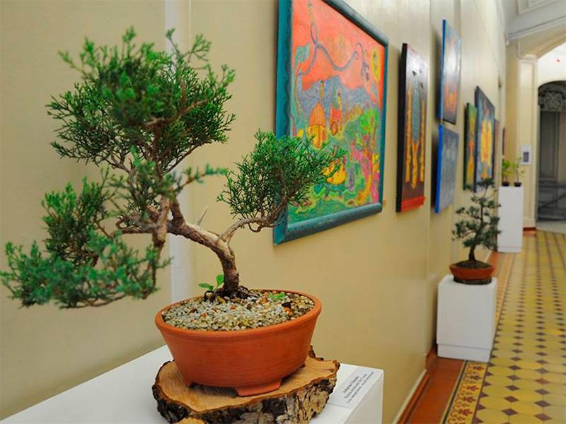 В Херсоне музей превратился в роскошный сад