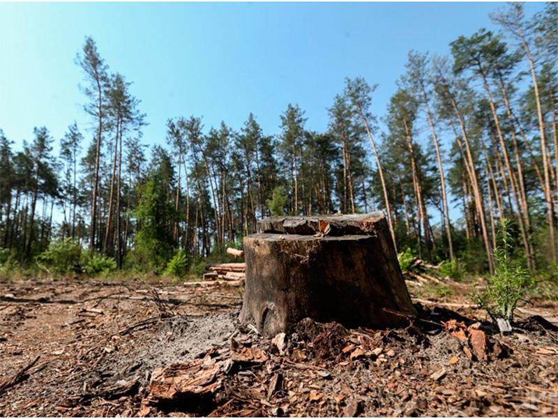 Херсонский лесхоз ликвидируют