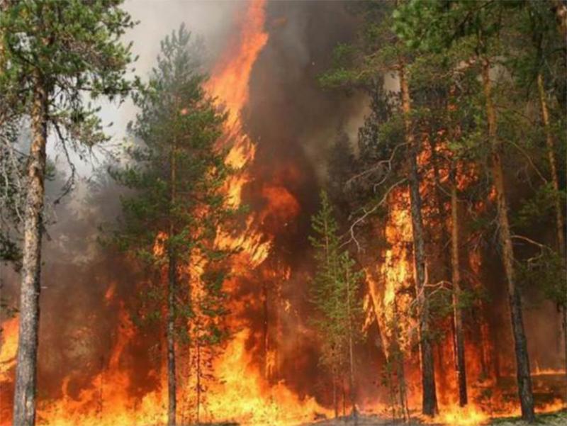 Жителів Херсонщини просять берегти ліс