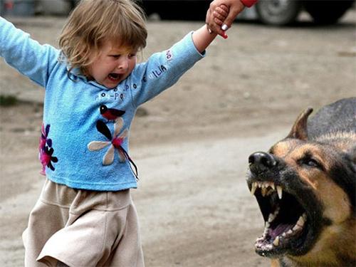 На Херсонщине псы нападают на малышей
