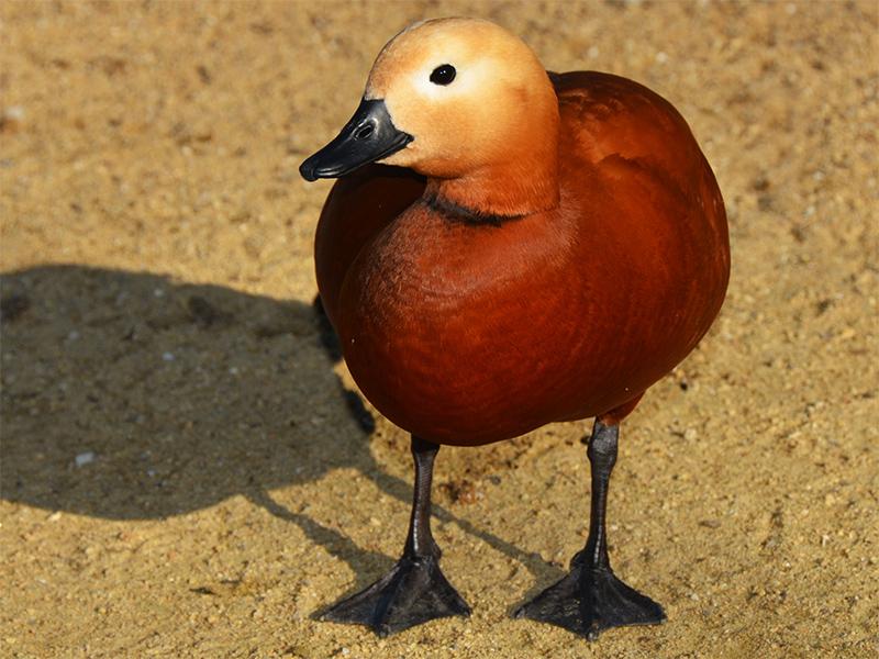 Тучи редких птиц накрыли Херсонщину