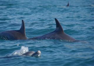 На Арабатке спасли дельфинов
