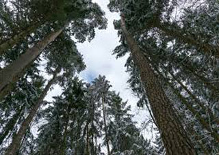 Херсонские спасатели ищут заблудившуюся в лесу крымчанку