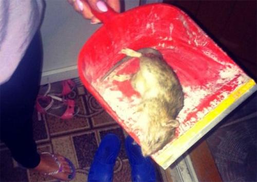 Крысам в Херсоне живется сыто и спокойно