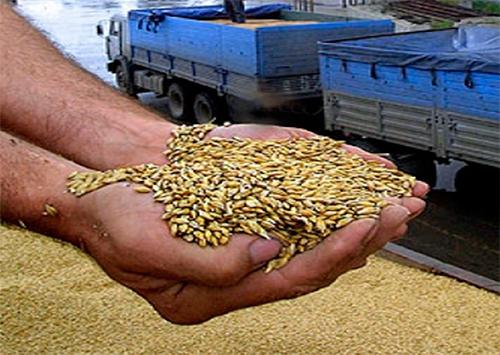 Махинации с зерном на Херсонщине: «обмани посредника»