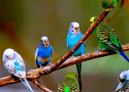 Похитители попугаев свирепствуют на Херсонщине