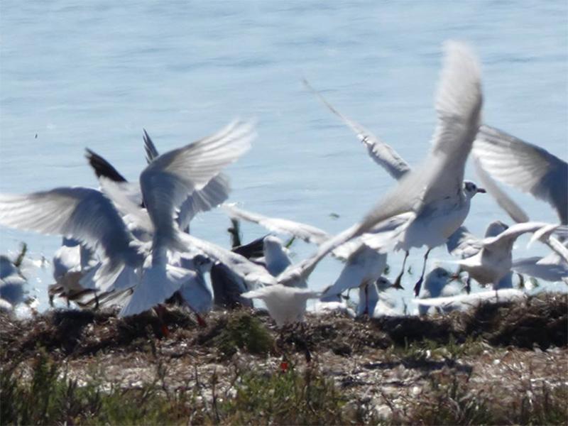 На Херсонщині стежать за птахами