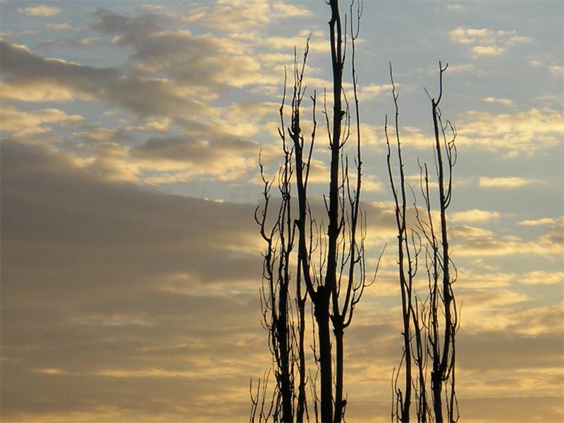 Скільки чекати херсонцям, аби комунальники спиляли аварійні дерева?