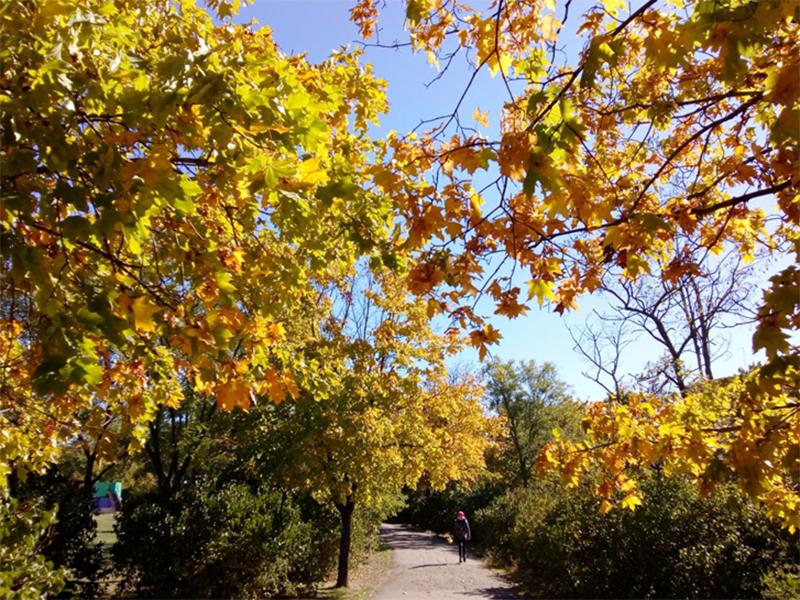Репортаж из осеннего парка Херсона