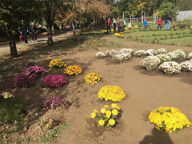 Каким был первый Осенний бал хризантем в Херсоне?
