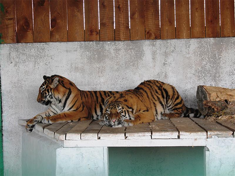Люксы для диких хищников строят на Херсонщине