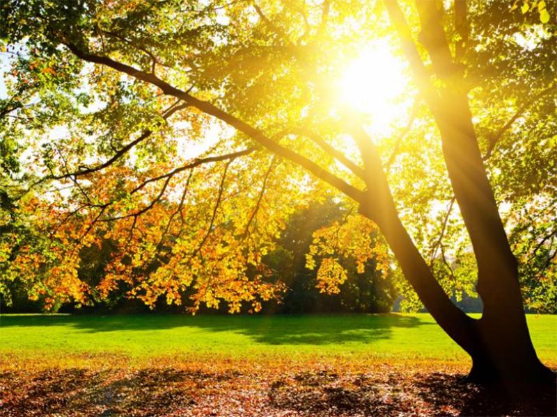 В Херсоне заблудилось лето – зафиксирован температурный рекорд