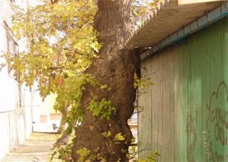 В Каховке падают деревья