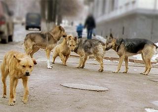 В Геническе опасны бродячие собаки
