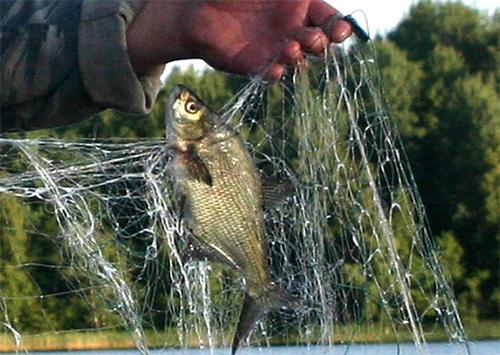 Рыбу на Херсонщине защищать больше не кому