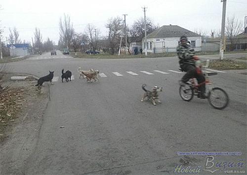 В Геническе хотят бороться с бродячими собаками