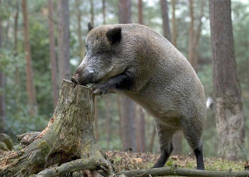 Вирощувати диких копитних на Херсонщині стане вигідно