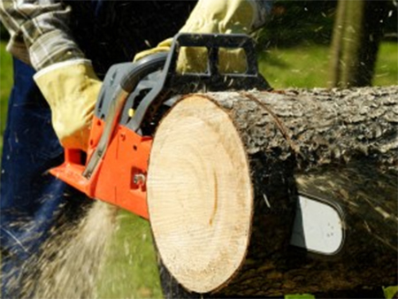 Битва за дрова в лесополосе на Херсонщине
