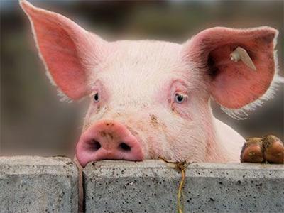 Цены в Херсоне становятся откровенно свинскими