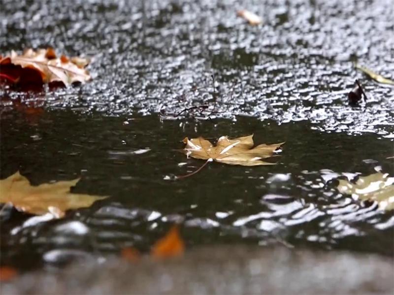 Подтопление в Херсоне спровоцировала опавшая листва