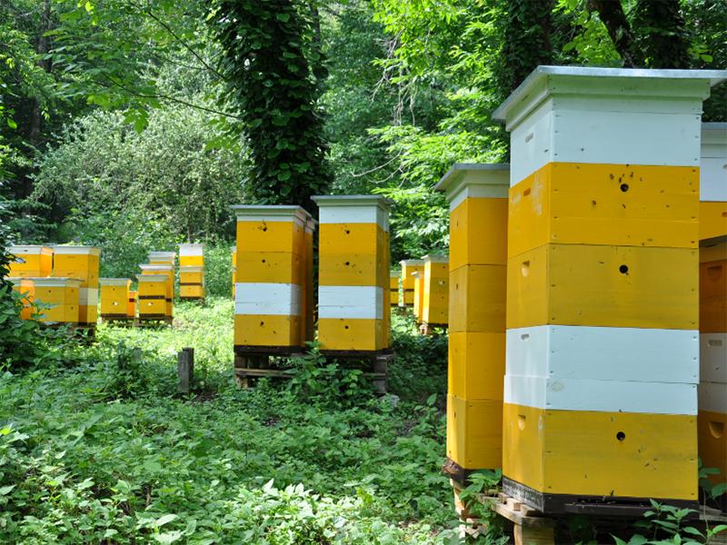 Мёду без пестицидов на Херсонщине быть