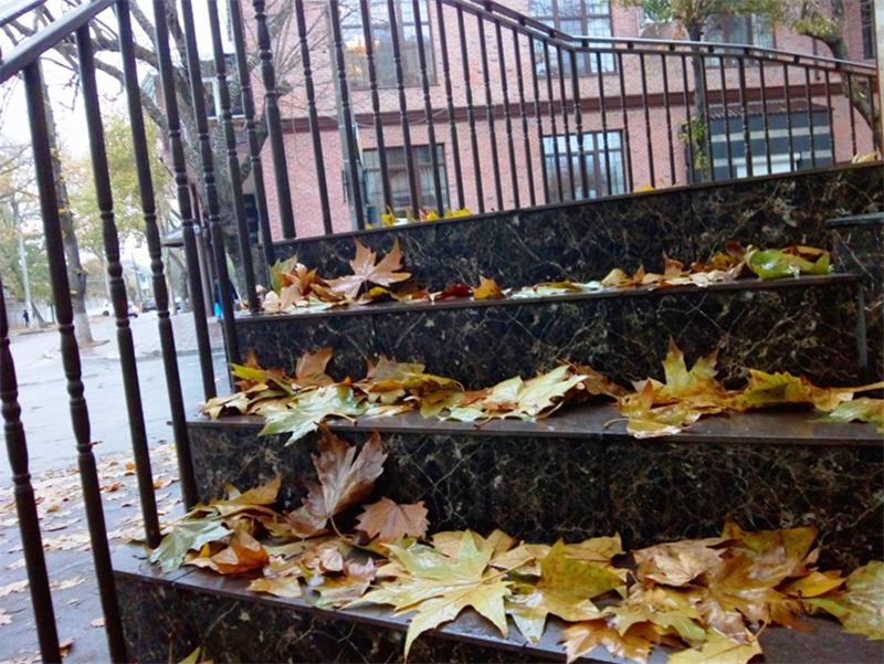 Осенние ковры Херсона