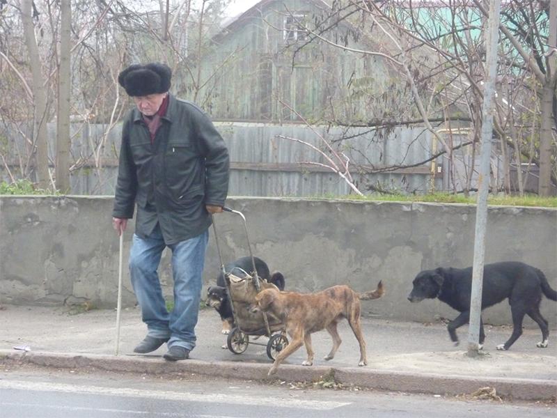 У херсонских стариков собаки еду отнимают