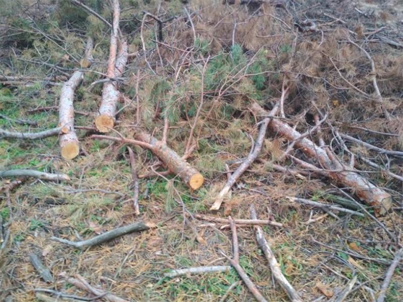 На Херсонщине нагло вырубают леса