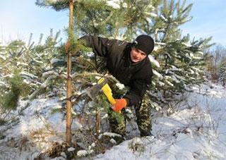 Херсонцев спасут только «законные» елки
