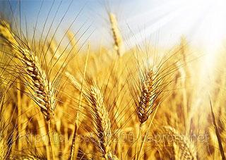 Качественные семена – залог хорошего урожая!