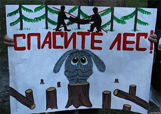 Прокуратура Херсонщини – проти заборони вирубки лісу?