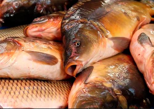 Где купить свежую рыбу в москве недорого