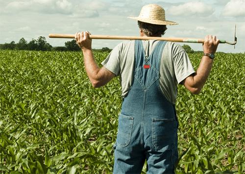 Фермеры Херсонщины на распутье