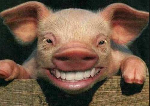 На Херсонщине случилось побоище на свиноферме