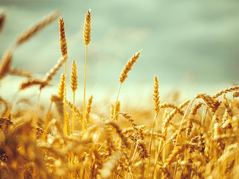 Херсонщина: хліб у степу важкий завжди