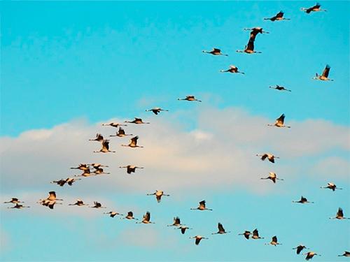 Навіть птахи тікають з окупованого Криму